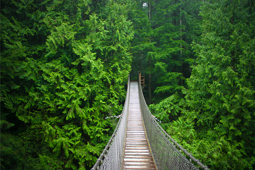 Suspension bridge in the middle of the forest