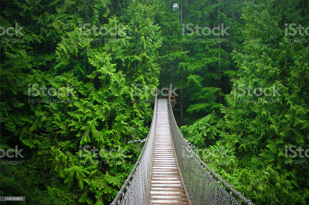 Suspension bridge in the middle of the forest stock photo
