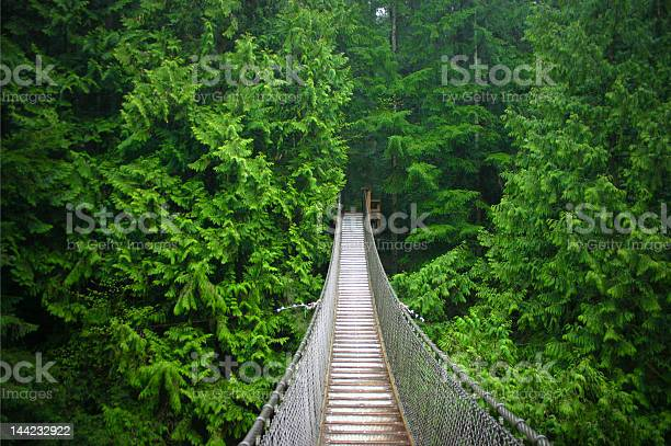 Photo of Suspension bridge in the middle of the forest