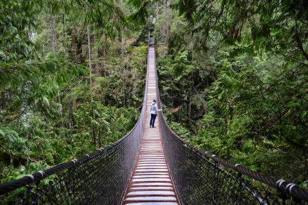 Suspension bridge over the canyon in rain forest. stock photo