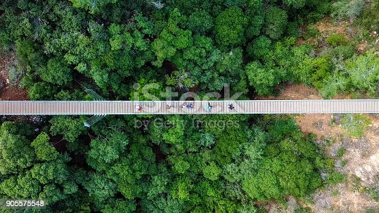 Suspension bridge surrounded by lush green forest - Aerial view