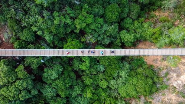 suspension bridge surrounded green forest - zona pedonale struttura creata dall'uomo foto e immagini stock