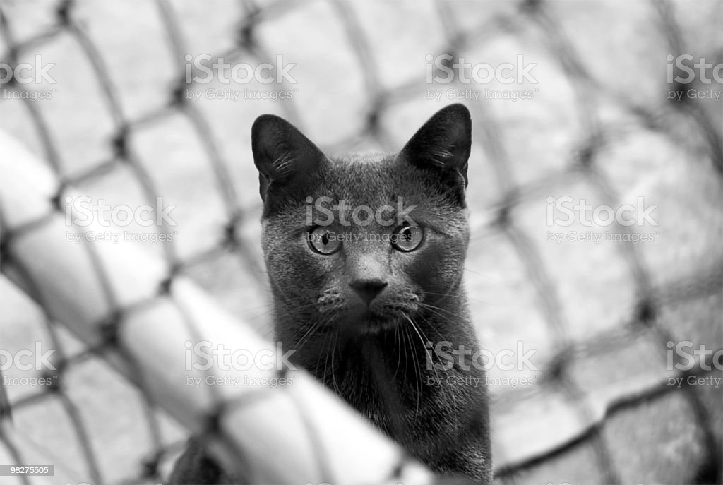 Suspicion cat royalty-free stock photo