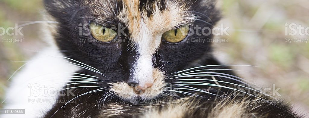 suspicious cat royalty-free stock photo