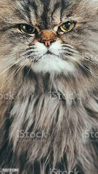 Suspicious Cat Portrait Stock Photo - Download Image Now
