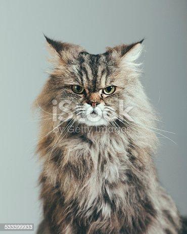 istock Suspicious cat portrait 533399933