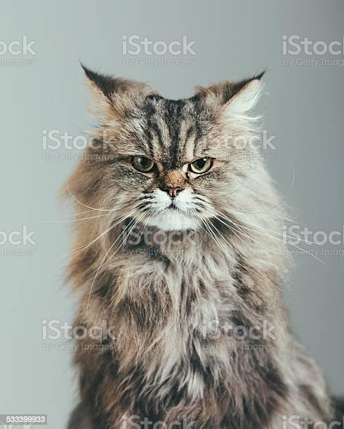 Suspicious cat portrait picture id533399933?b=1&k=6&m=533399933&s=612x612&h=j6iwfk7ygyrwyvwhbogekilqpbrjco8g ps2bwbenvq=