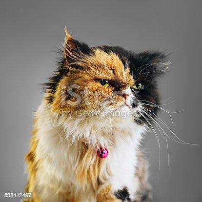 istock Suspicious cat portrait 538412497
