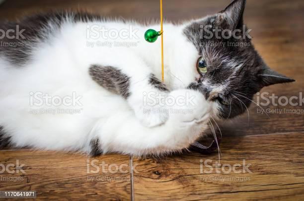 Suspicious playful cat with toy picture id1170641971?b=1&k=6&m=1170641971&s=612x612&h=bwumyu8v4g2qxvjzfkxfy6gvocft bix6mj1 lrn91a=