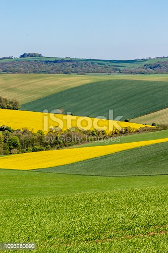 A Sussex patchwork landscape in spring, with canola/rapeseed and green fields