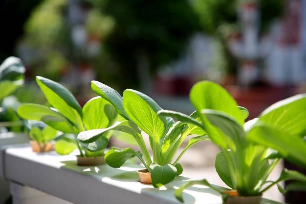 持続可能な農業産業 - sustainability ストックフォトと画像