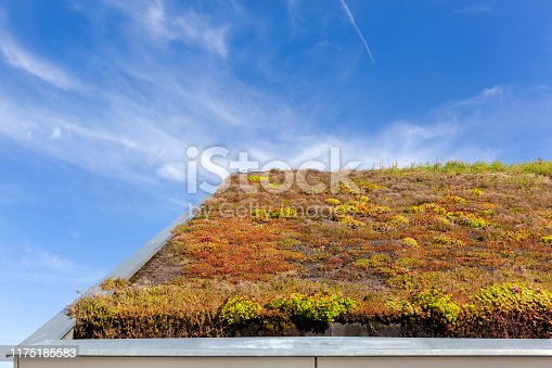 Sustainable and ecological green roof in the Netherlands