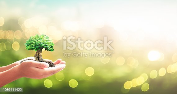 Human hands holding big tree over blurred city sunset background