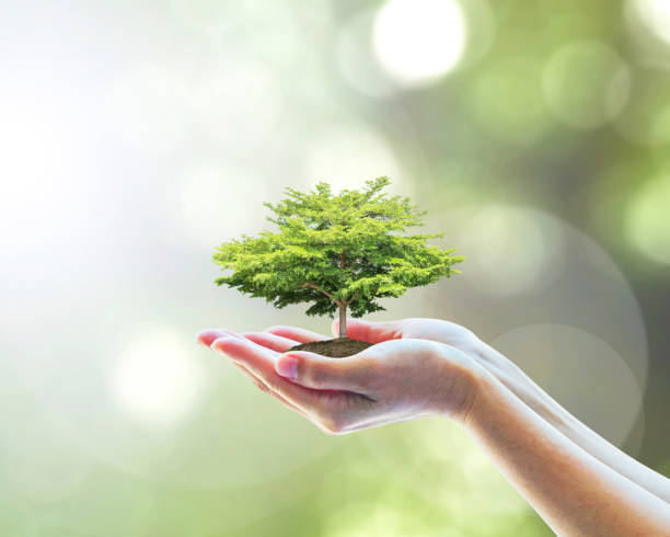 sustainable environment, saving environmental ecosystem of forest, and go green concept with tree planting on volunteer's hands - ecosystem stock photos and pictures