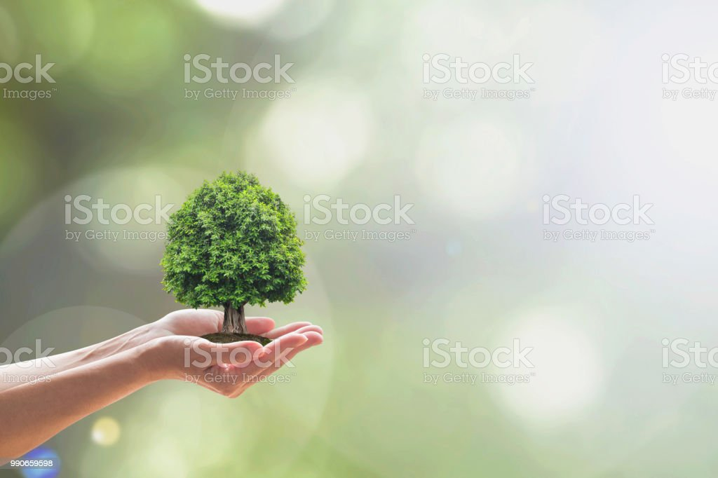 Sustainable environment, saving environmental ecosystem of forest, and go green concept with tree planting on volunteer's hands stock photo