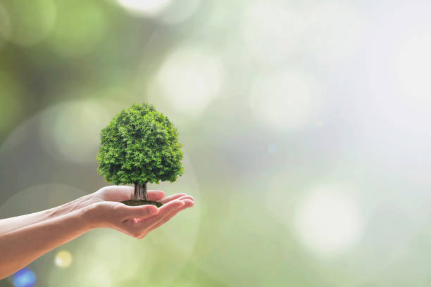 sustainable environment, saving environmental ecosystem of forest, and go green concept with tree planting on volunteer's hands - earth day stock pictures, royalty-free photos & images