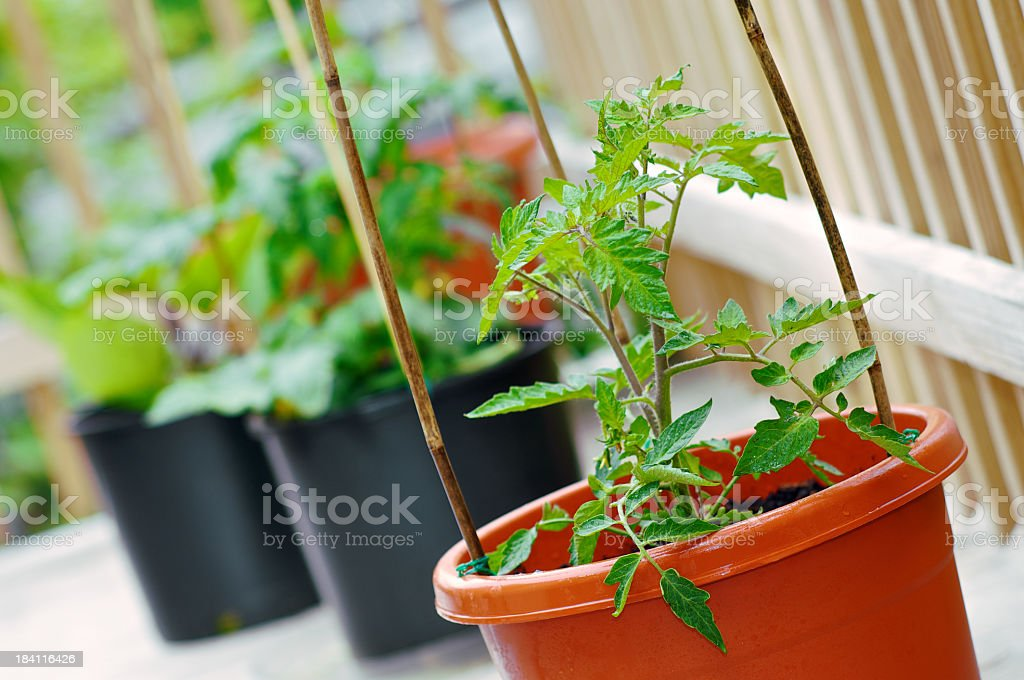 Sustainable food source stock photo