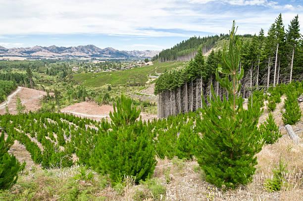 sustainable forestry management - herbebossing stockfoto's en -beelden