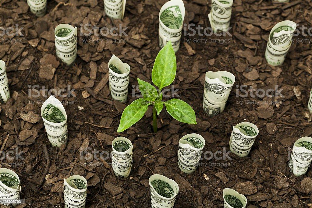 Sustainable resources stock photo