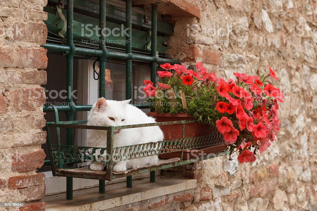 Suvereto, Liguria, Italy stock photo