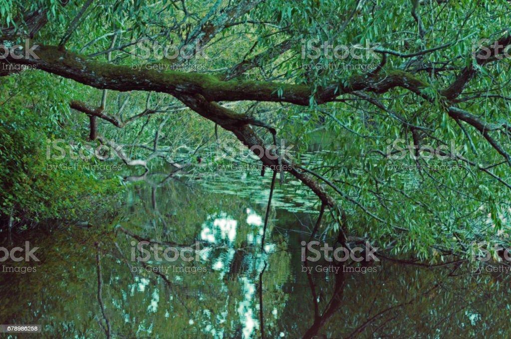 Svartan rivière Vasteras Suède photo libre de droits
