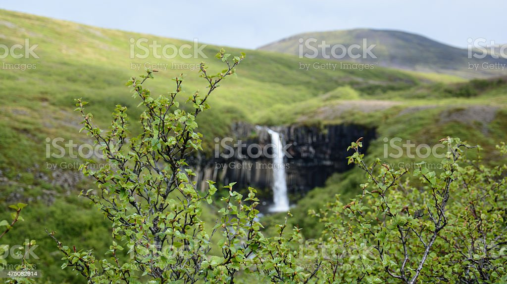 Svartifoss on Iceland royalty-free stock photo