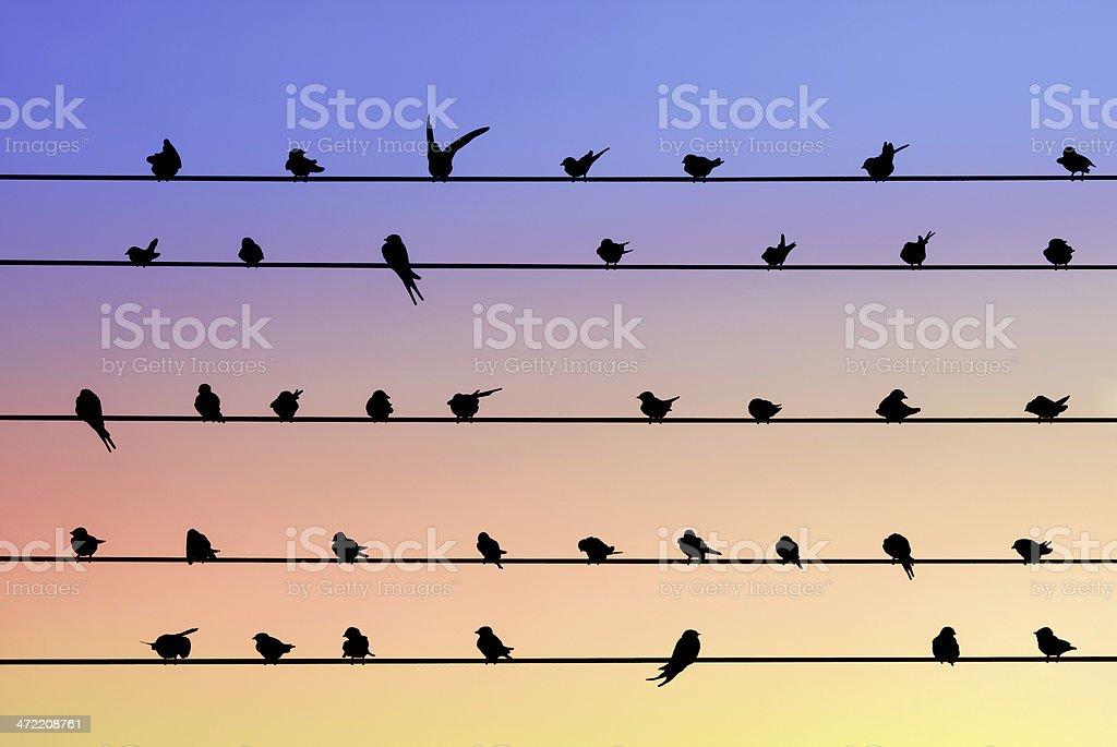 Schwalbe Vögel Sitzen Auf Der Elektrischen Drähten Und ...