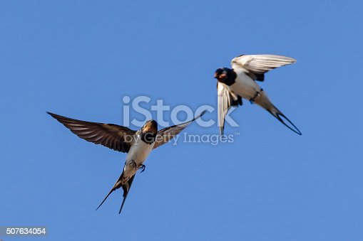 istock Swallow on sky background 507634054