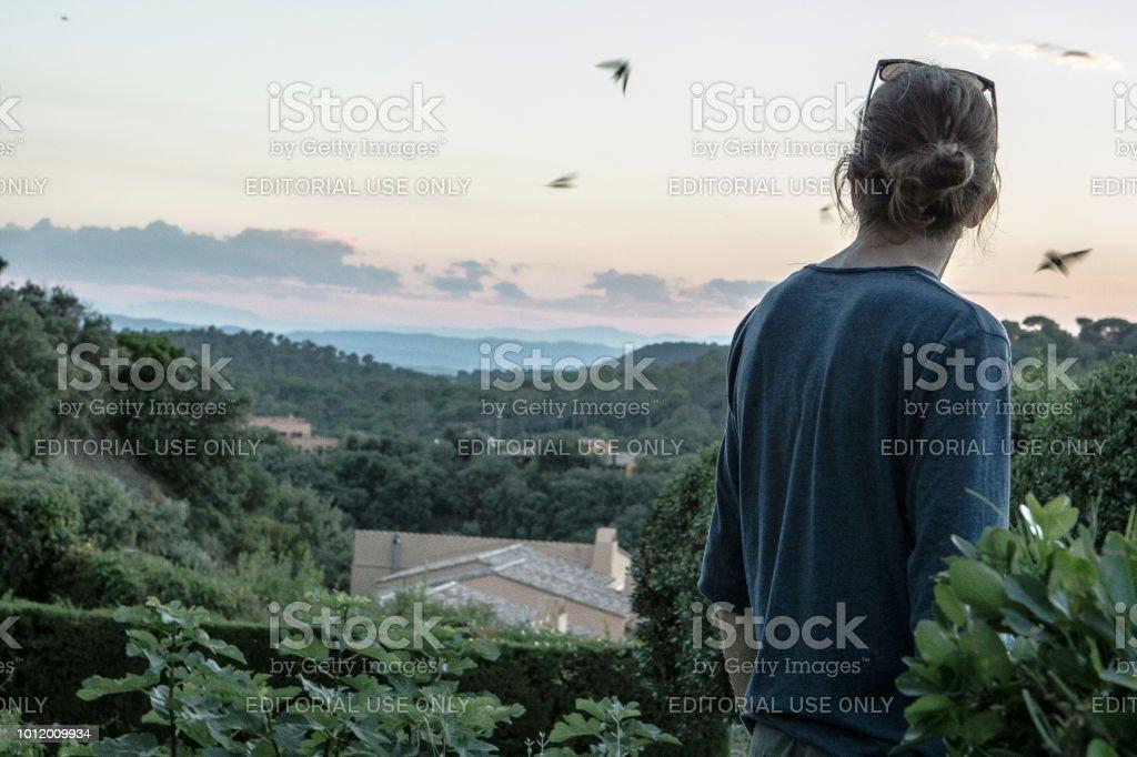 Golondrinas de caza después de puesta del sol - foto de stock