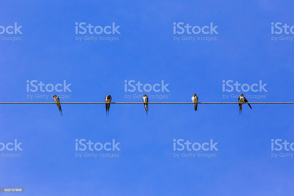 Swallows on the wire stock photo