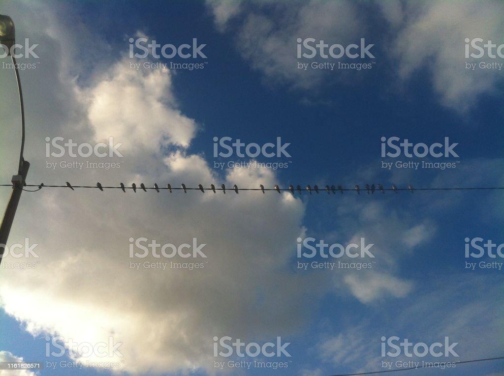 Birds resting in summer