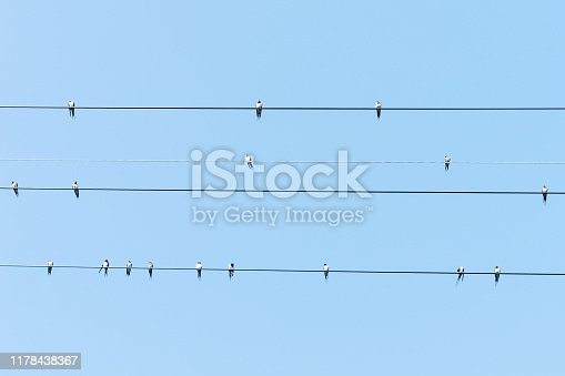 Swallows resting on electric wires against blue sky.