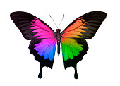 Swallowtail Butterfly in Rainbow Colors Isolated On White