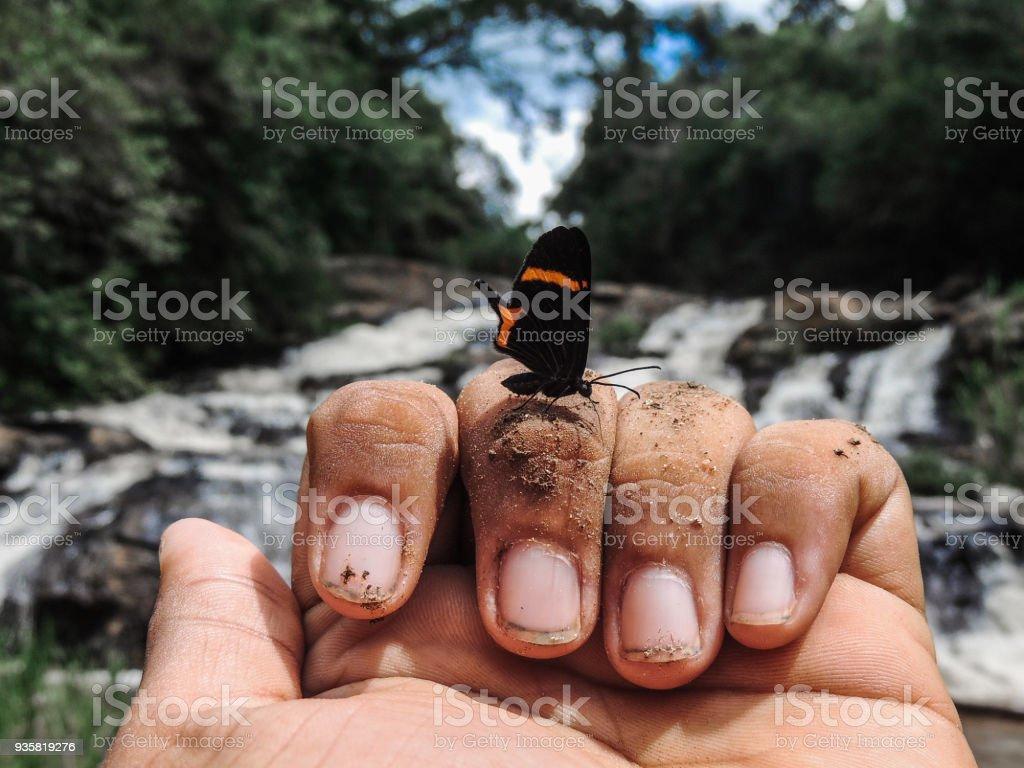 Swallowtail Butterfly Landing on Fingers stock photo