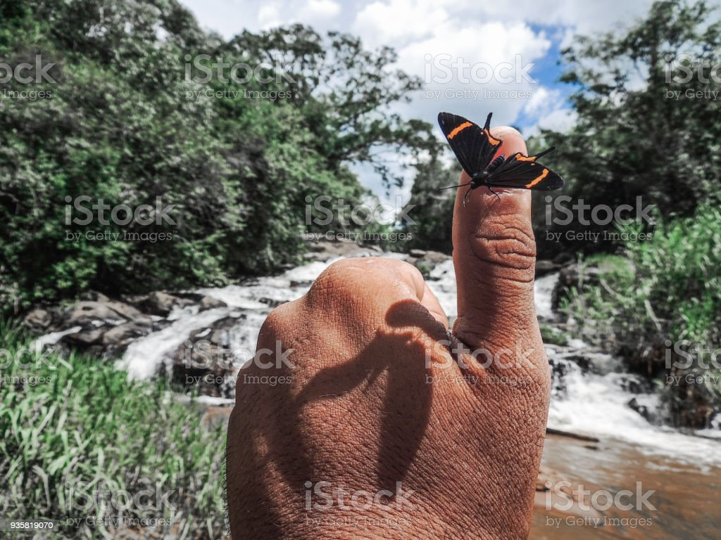 Swallowtail Butterfly on Thumb Up stock photo