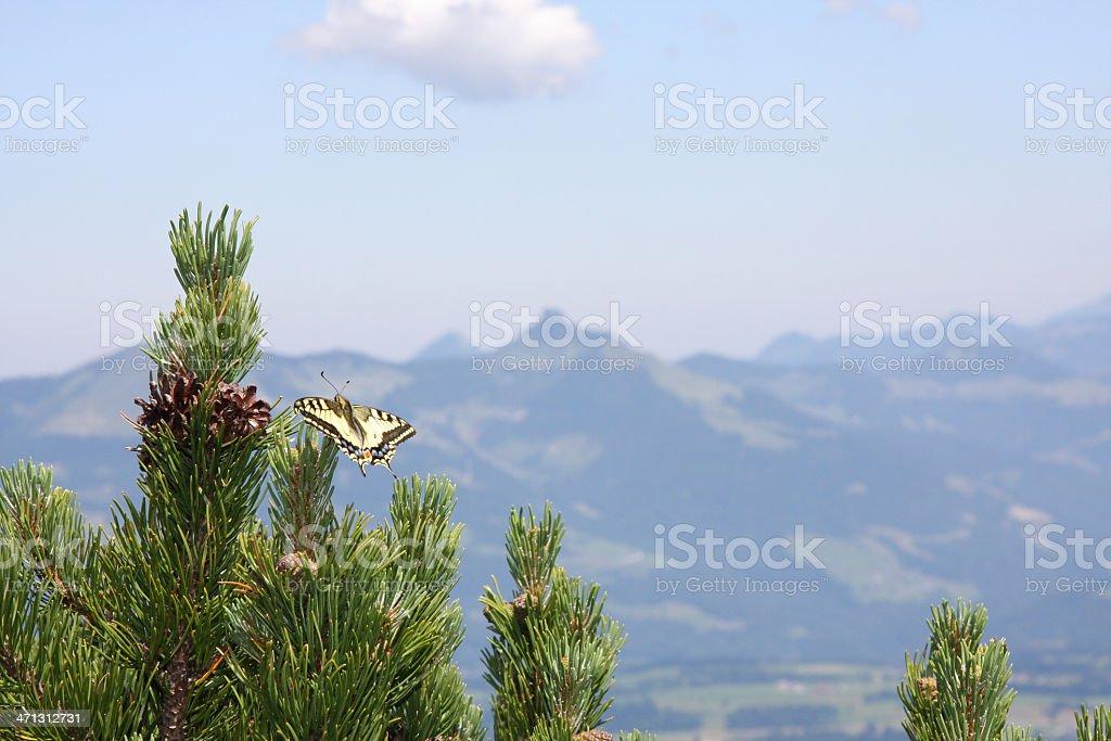 Swallowtail in the mountains stock photo