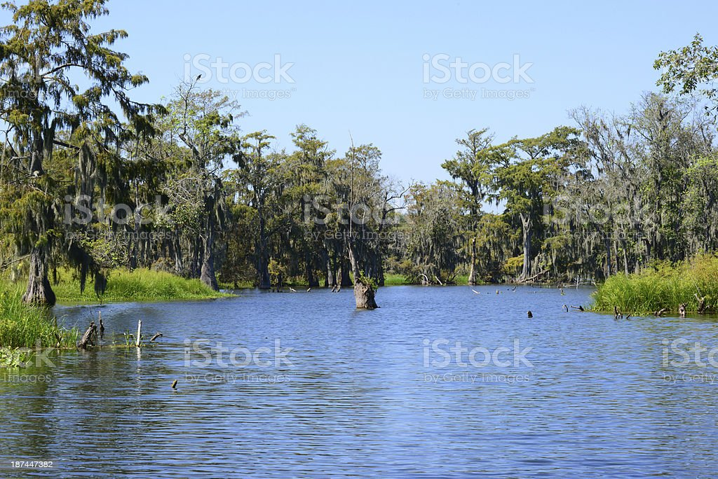 Swamp and Cypress Trees royalty-free stock photo