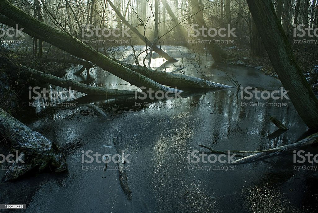 Swamp and Frost stock photo