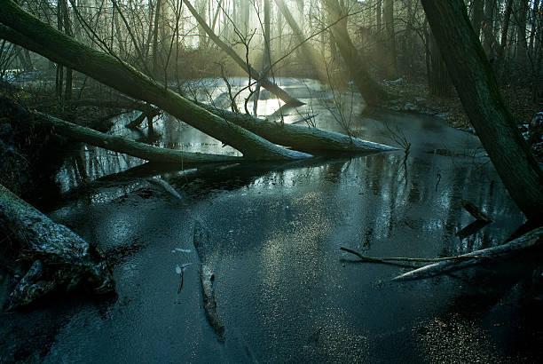 swamp i frost - bagno zdjęcia i obrazy z banku zdjęć