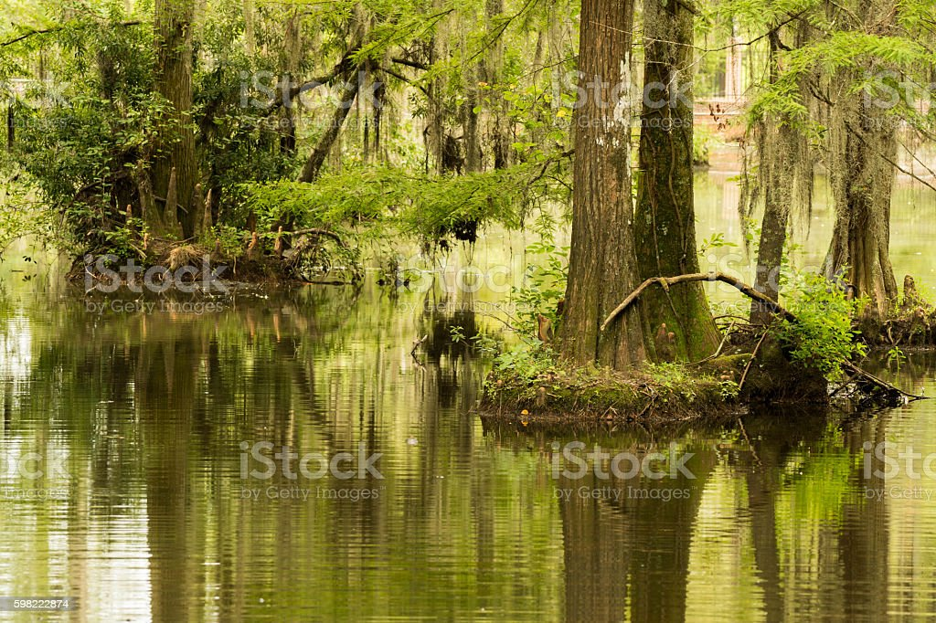 swamp and wetlands stock photo