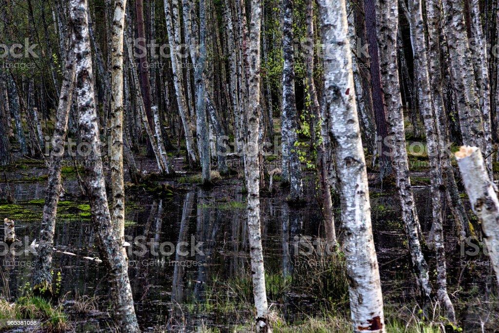 Marais et les bois de la mer Baltique - Photo de Ambiance - Événement libre de droits