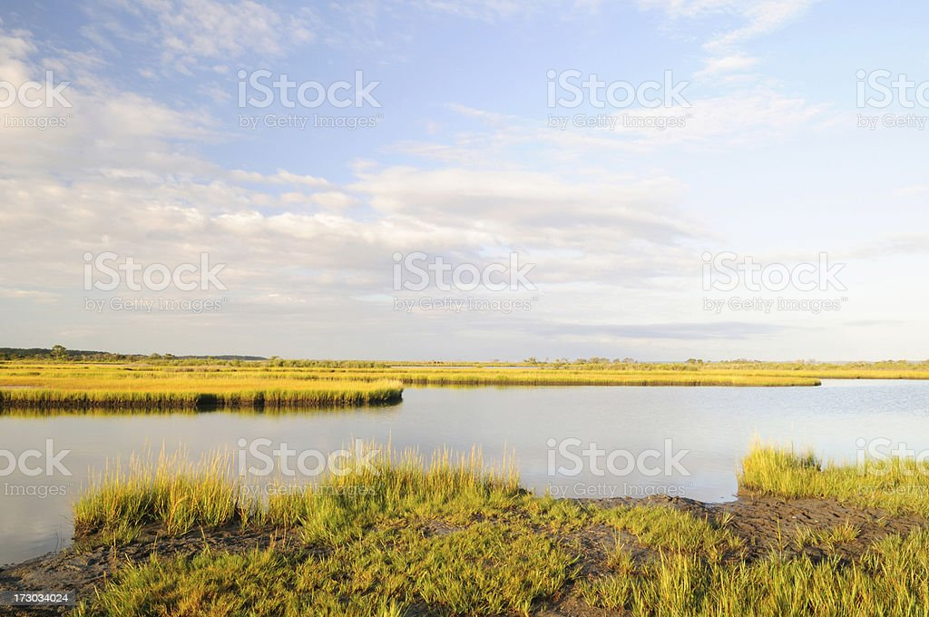 Swamp at Assateague royalty-free stock photo