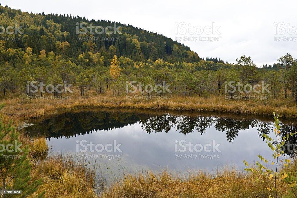 Swamp at Saint Anna Lake from Romania royalty-free stock photo