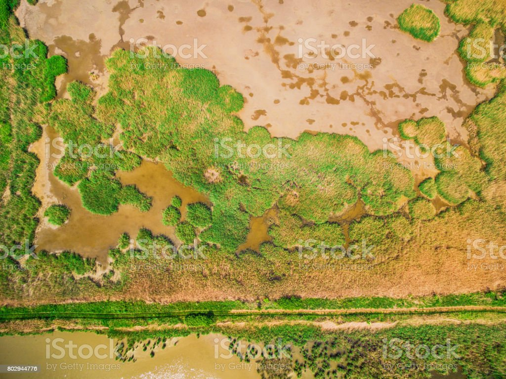 Swamp directly above view stock photo