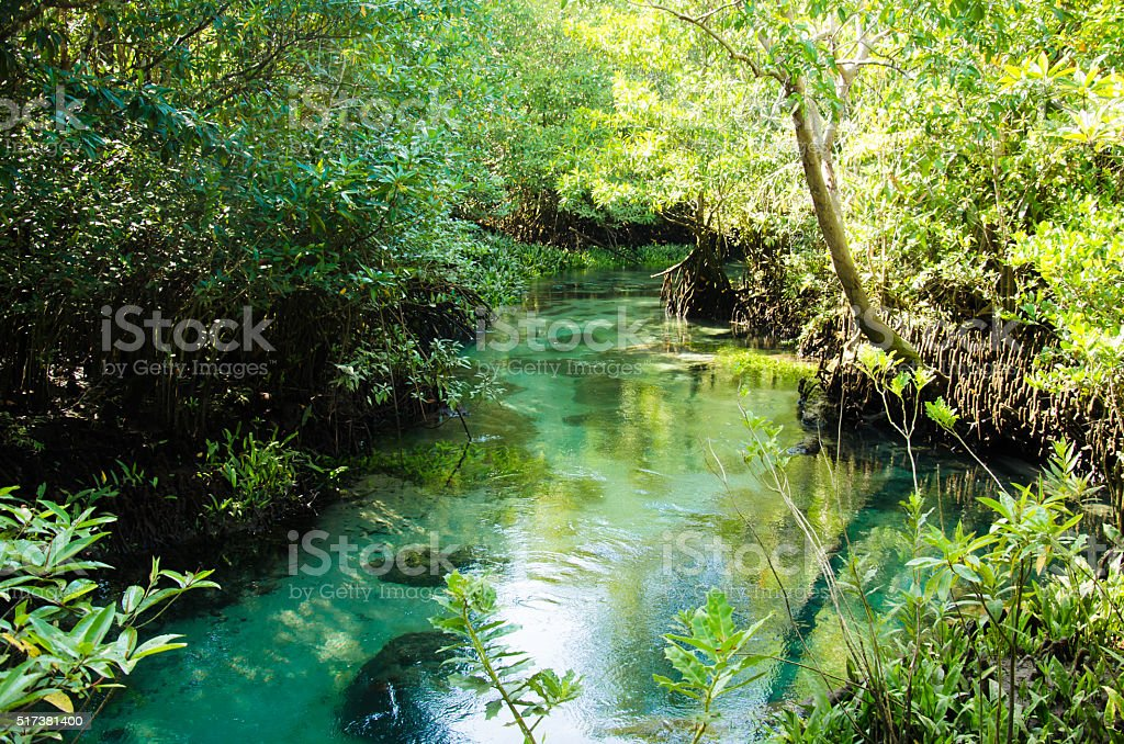 Swamp forest stock photo