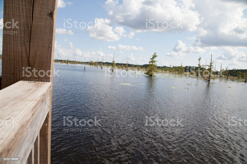 Swamp from a Pier stock photo