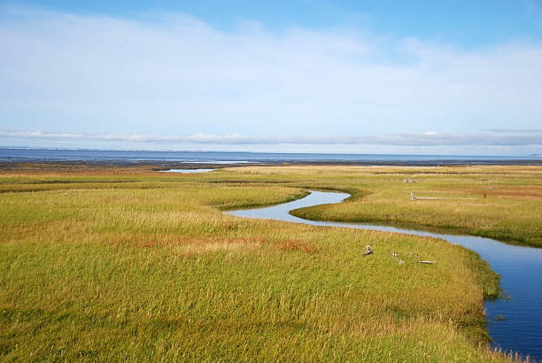 swamp in alaska – Foto