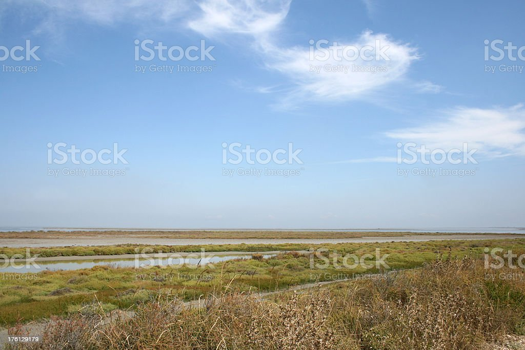 Swamp in French Camargue royalty-free stock photo