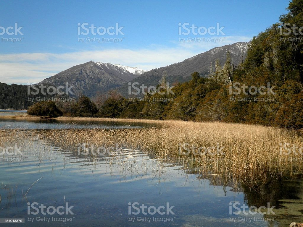 Swamp in South America royalty-free stock photo