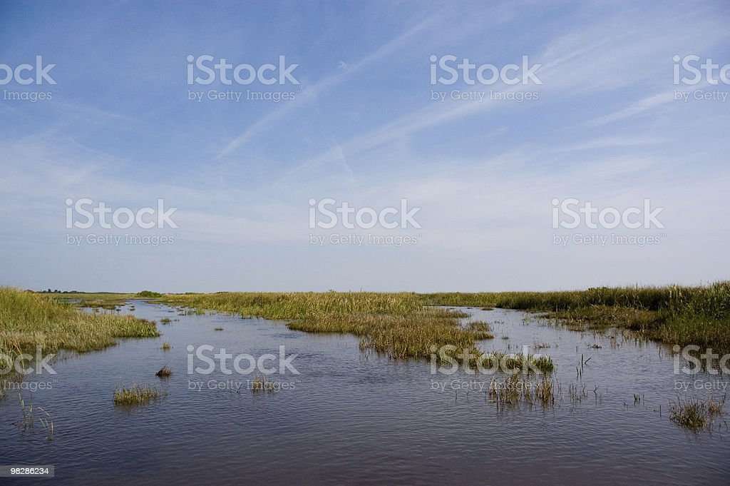 Swamp in the Everglades National Park  royalty-free stock photo